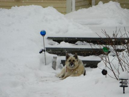 january-12-snow-dog