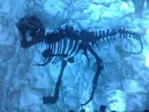 t-rex-frozen-bones