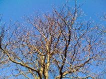 april-16-leafless