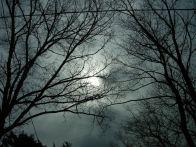 april-20-through-the-sunroof