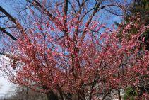 april-23-blossom