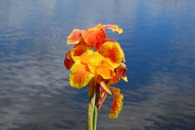 April 29 - A Flower At Celebration Lake.jpg