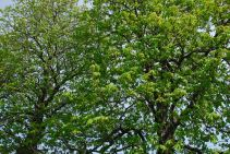 april-30-green-is-here