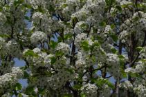 may-1-spring-is-blossoming
