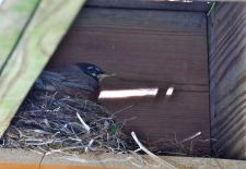 may-10-on-the-nest