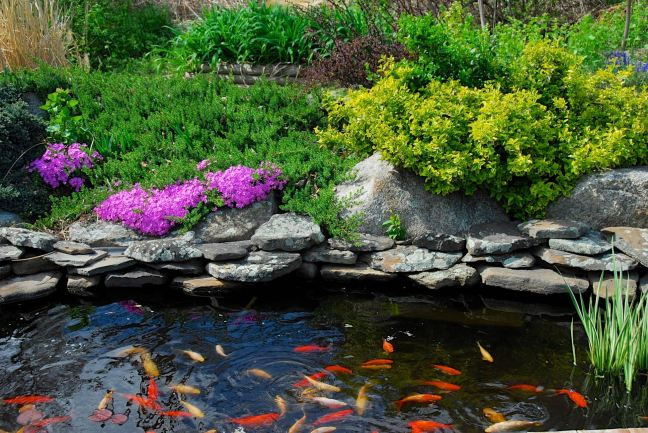 May 2 - Pond Plants.jpg