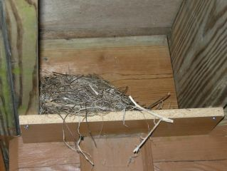 may-5-robins-nest