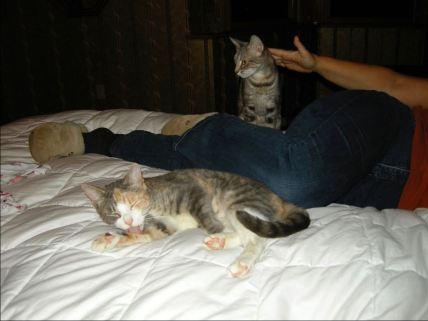 june-30-calmer-cats