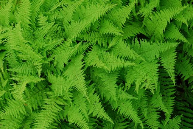 July 19 - Ferns From Above.jpg
