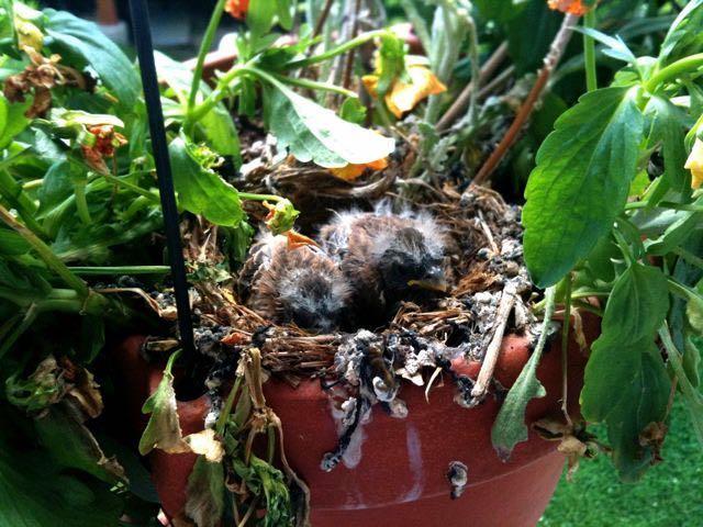 July 20 - Growing Birds.jpg