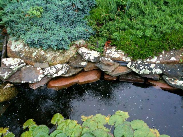 July 8 - Lichen.jpg