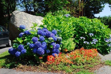 august-9-beautiful-blue