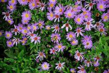 september-13-late-summer-flowers