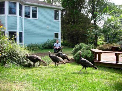 september-8-wild-turkey-invasion