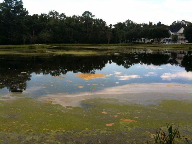 October 14 - Celebration Lake Needs Cleaning.jpg
