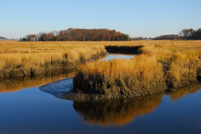 November 11 - Essex River Fall Colors.jpg