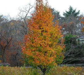 november-12-the-last-leaves