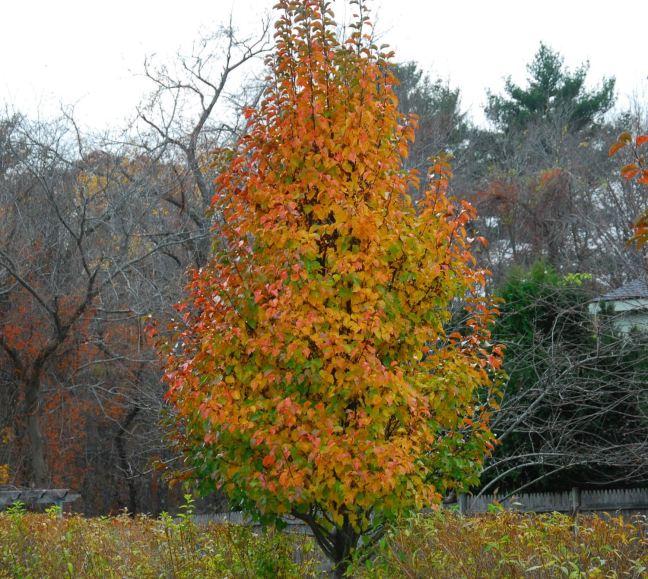 November 12 - The Last Leaves.jpg