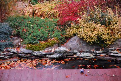 november-14-leave-the-pond-alone