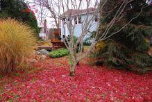 november-15-red-carpet