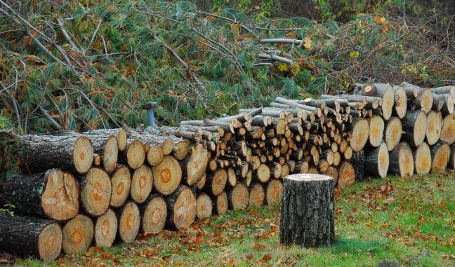 November 16 - Wood Pile.jpg