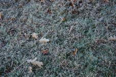 november-18-white-grass