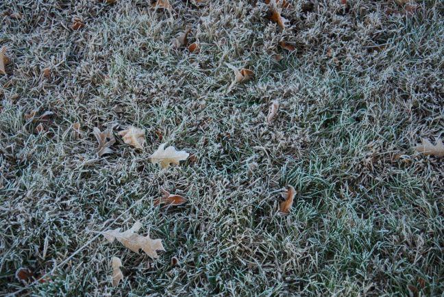 November 18 - White Grass.jpg