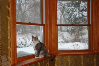 december-20-the-first-real-snow-of-200910