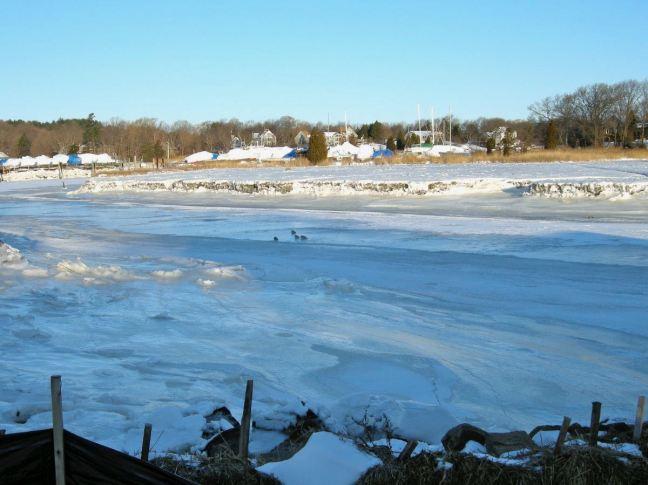 December 22 - Ice Gulls.jpg