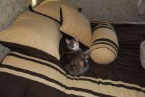 December 29 - Comfy Chloe