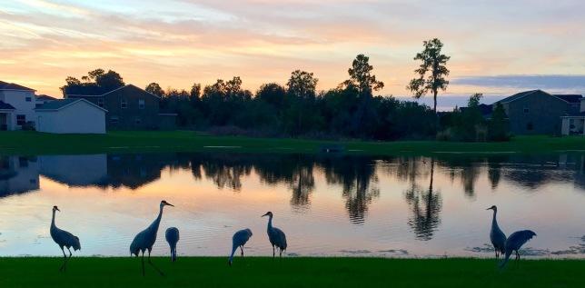 Seven Sandhill Cranes, and a Sunrise
