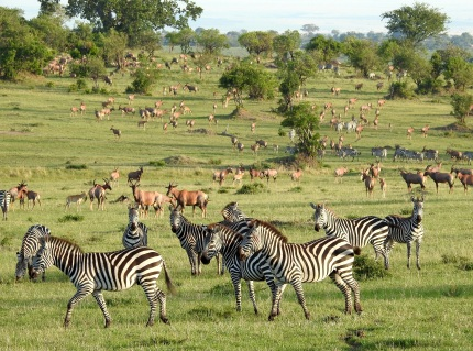 North Serengeti Zebra, Gazelle, more