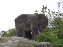 Elephant on top of rocks