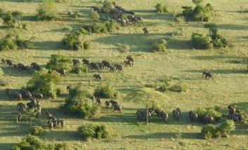 Elephants from balloon