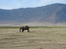 Elephant in Ngorongoro Crater