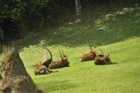 Wild Africa Trek 123